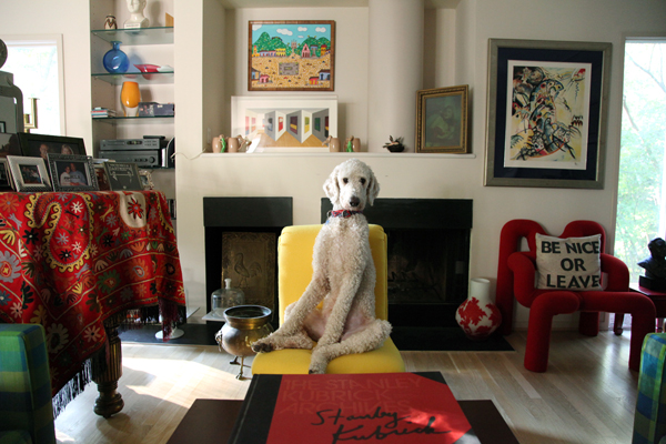 © Le Caniche Fou | white standard poodle, dogs on furniture