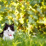 Arizona-pet-photography, outdoor-cat-portraits