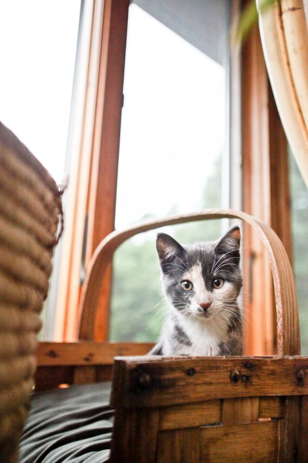 © Chocolate Moose Images | Daily Dog Tag |  on-location-cat-photography, kitten-in-basket