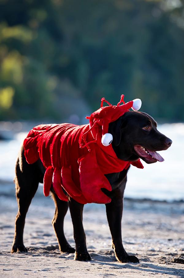 © Black Box Photography | Howl-O-Ween, dog-wearing-costume