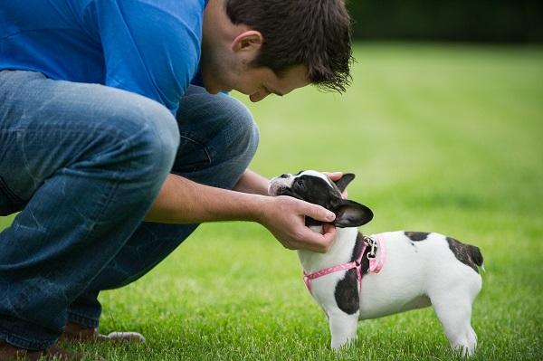 © Brittany Anderson Photography | Daily Dog Tag | French Bulldog puppy