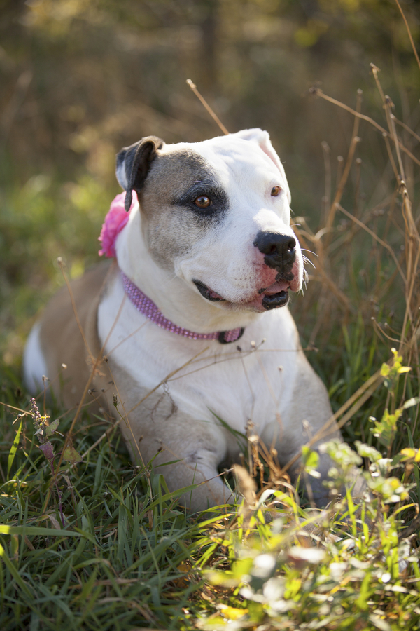 © Tangled Lilac Photography | Lifestyle-dog-photography