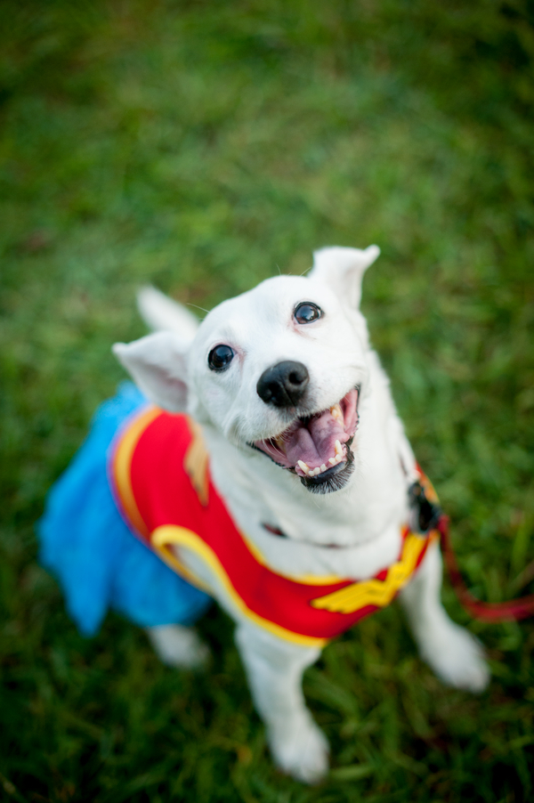 © Jules Photography dog-wearing-wonder-woman-costume