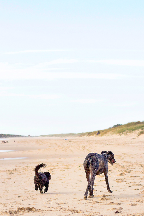 © 100 Loyal Faces Photography | Daily Dog Tag | Lifestyle-pet-photography-beach, dog-best-buddies