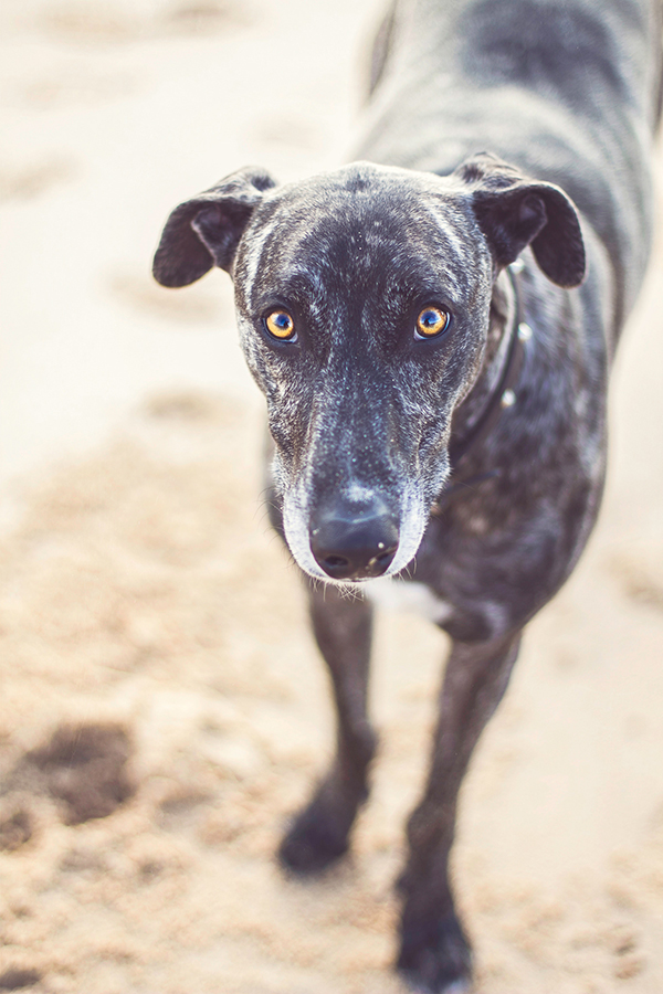 © 100 Loyal Faces Photography | Daily Dog Tag | Lifestyle-pet-photography-beach
