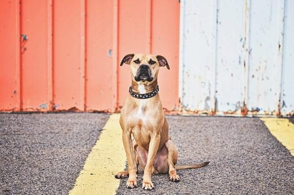 © Jessica Cobb Photography | Daily Dog Tag | Handsome-dog, lifestyle-dog-photography