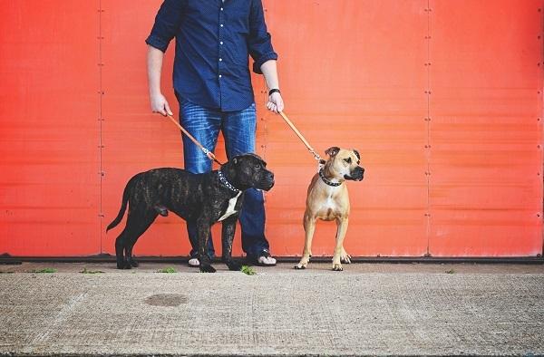 © Jessica Cobb Photography | Daily Dog Tag |lifestyle-dog-portraits