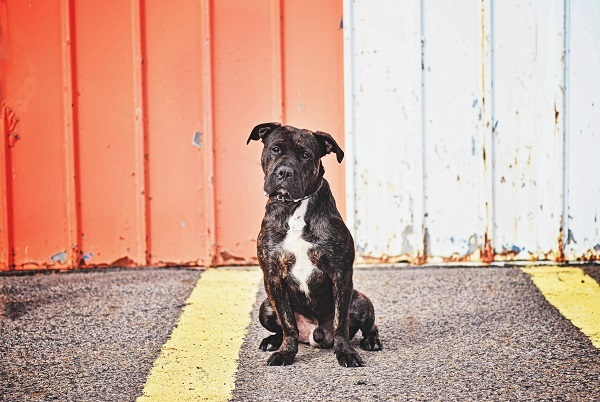 © Jessica Cobb Photography | Daily Dog Tag |handsome-dog
