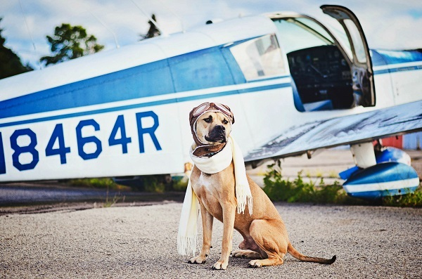 © Jessica Cobb Photography | Daily Dog Tag | Handsome-dog, Flying Ace