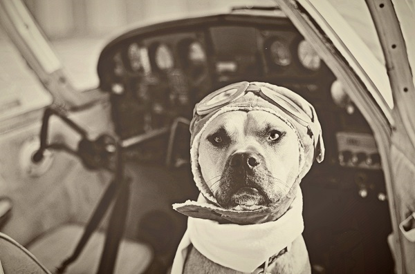 © Jessica Cobb Photography | Daily Dog Tag | sepia-toned-dog-pilot-photo