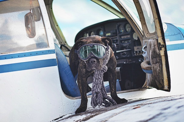 © Jessica Cobb Photography   Daily Dog Tag  lifestyle-dog-photography-with-plane
