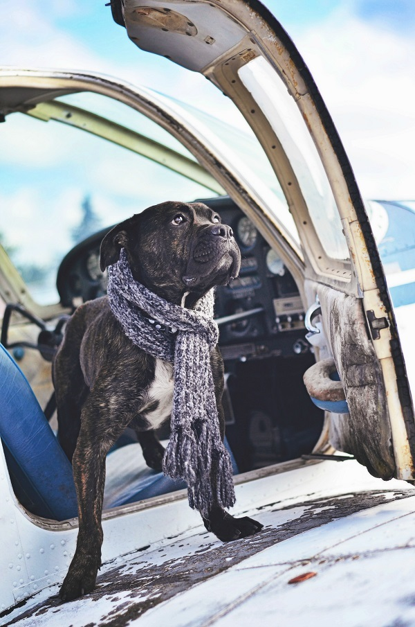 © Jessica Cobb Photography | Daily Dog Tag | handsome-dog-on-wing-of-small-plane