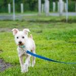 JessicaPainter-Adoptable-dog-Regional-Animal-Shelter16