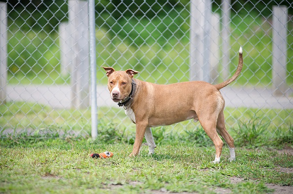 JessicaPainter-Adoptable-dog-Regional-Animal-Shelter5