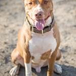 JessicaPainter-Adoptable-dog-Regional-Animal-Shelter6