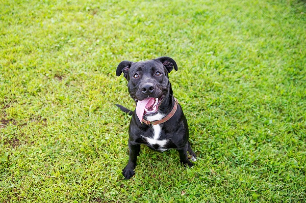 JessicaPainter-Adoptable-dog-Regional-Animal-Shelter9