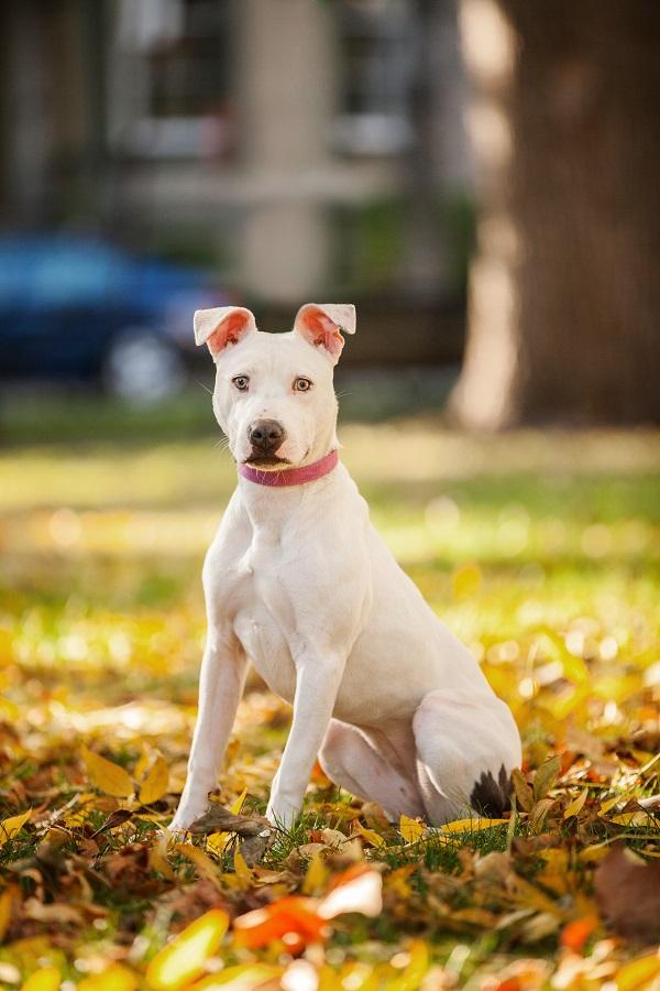 © Kathryn Schauer | Connecticut dog photographer