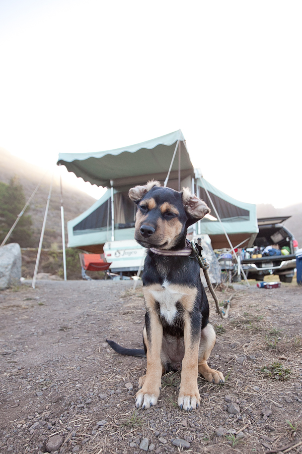 © Chocolate Moose Images | Daily Dog Tag | camping-with-puppy