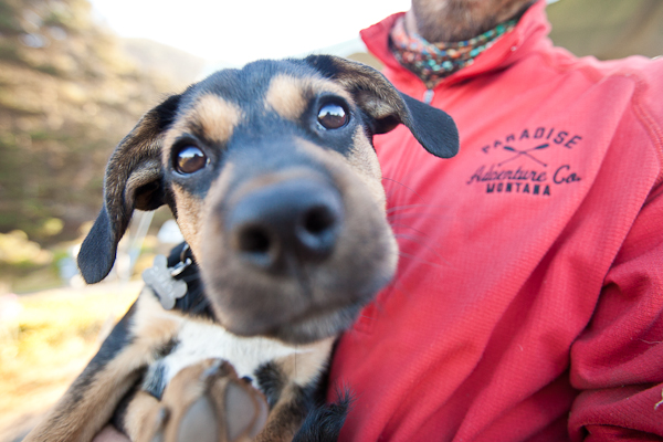 Puppy Love:  Samara the Cattle Dog Mix