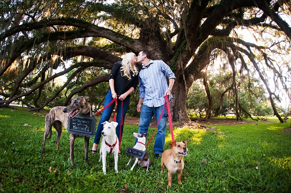 © Limelight Photography | engagement-portraits-with-4-dogs