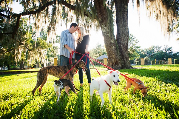 © Limelight Photography | Florida-engagement-session-with-4-dogs