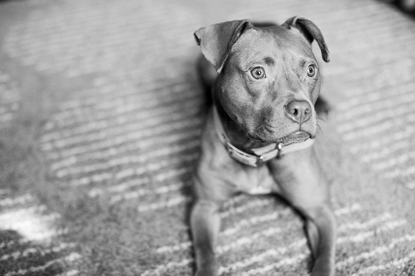 © tPoz Photography | adorable adoptable small  mixed breed from BARCS