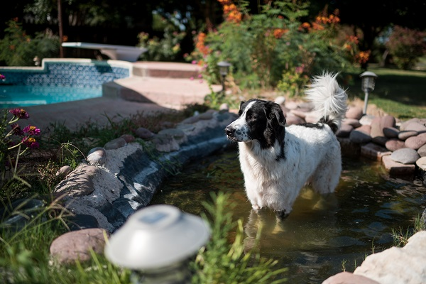 © Anna Smith Photography | Daily Dog Tag | dog-in-pond-inspired by him