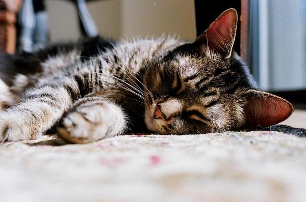 © Analog Wedding  | on location cat photography, catnap, film photographer