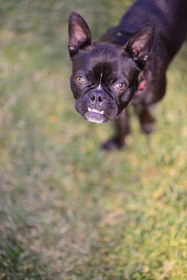 © Annie Tao Photography   handsome dog, lifestyle dog portraits