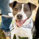 Denver Paws-denver-photography-engagement-dog-family-sloans-lake-pets-5