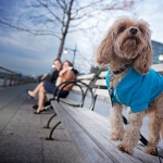 EXO Photography, dog in blue jacket