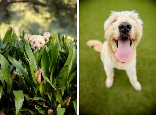 © Eye Wander Photo | funny dog photos, mixed breed dog at park, lifestyle-pet-portraits