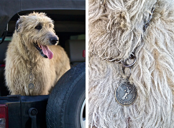 © Furtography | New Zealand her dog, Irish Wolfhound hero