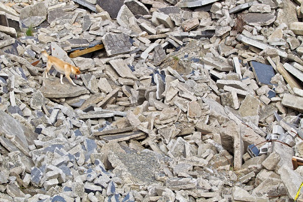 © Furtography | USAR dog searching earthquake rubble