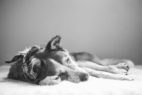 © RDP PhoDOGraphy | Senior dog in foster hospice