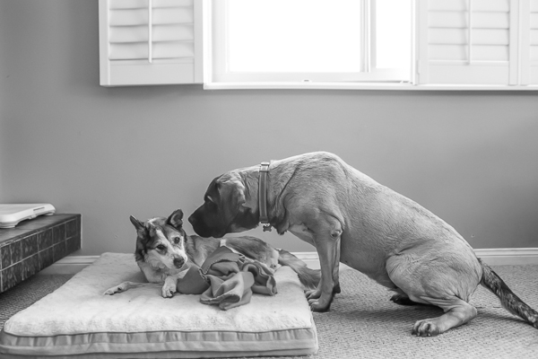 © RDP PhoDOGraphy |  Photographer fosters senior dog