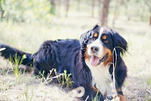 © Jessica Newman Photography | lifestyle dog photography