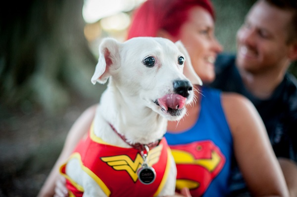 © Jules Photography | Daily Dog Tag | dog in superhero themed engagement photos
