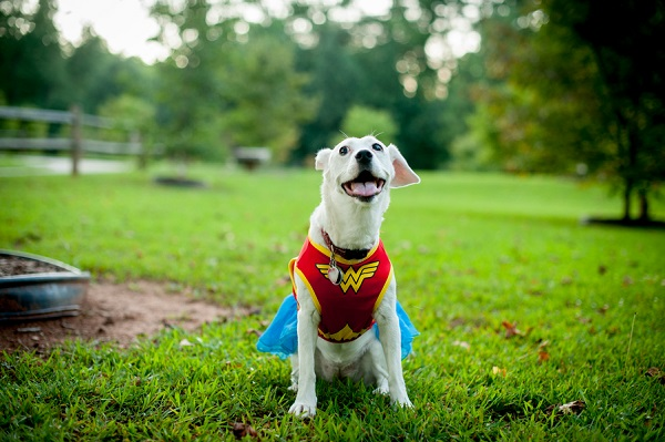 © Jules Photography | dog wearing Wonder Woman costume