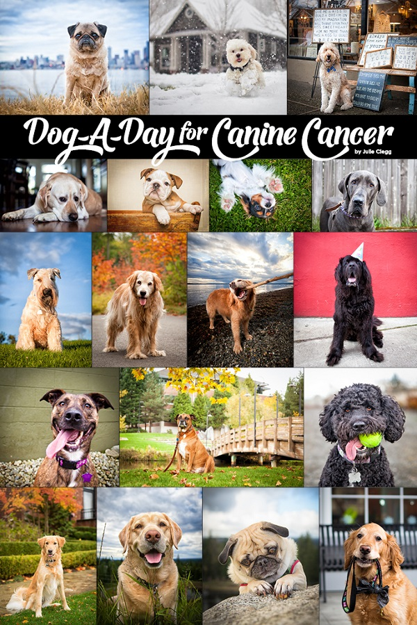Spotlight: Julie Clegg | Dog-A-Day for Canine Cancer