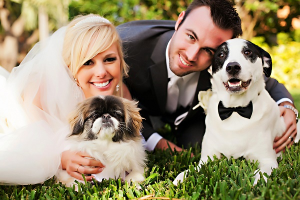 © Limelight Photography, Fetching Photo and links, best wedding dogs
