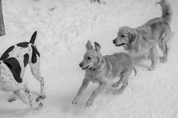 © Meigan Canfield Photography | Dogs running in snow, winter fun for dogs