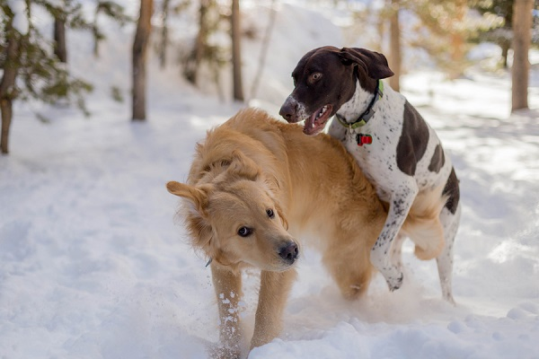 © Meigan Canfield Photography | dogs playing in snow