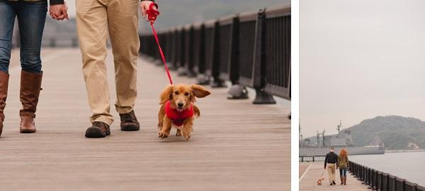 © Oeil Photography | lifestyle-dog-portraits, Japan