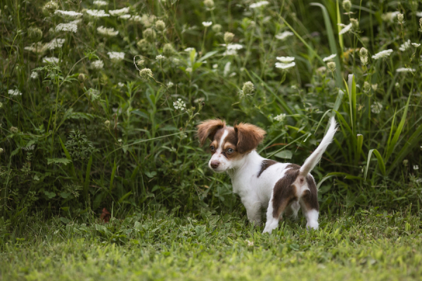 © Paw Prints- Pet Portraits by Charlene | Puppy Love, on-location-dog-photography