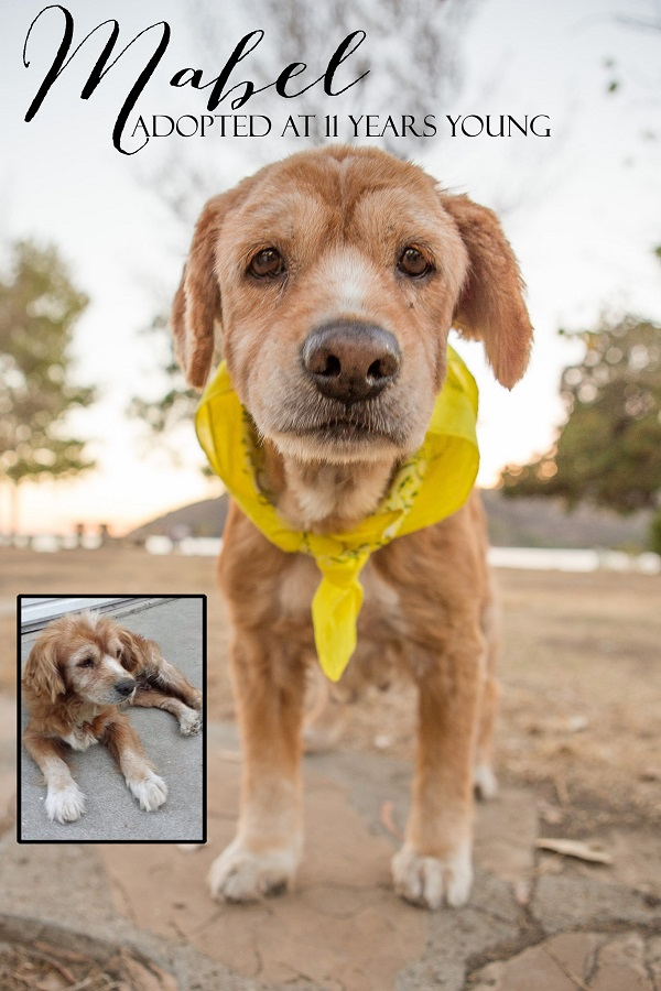 © RDP PhoDOGraphy | 11 year old dog adopted from high kill shelter thanks to Frosted Faces Foundation