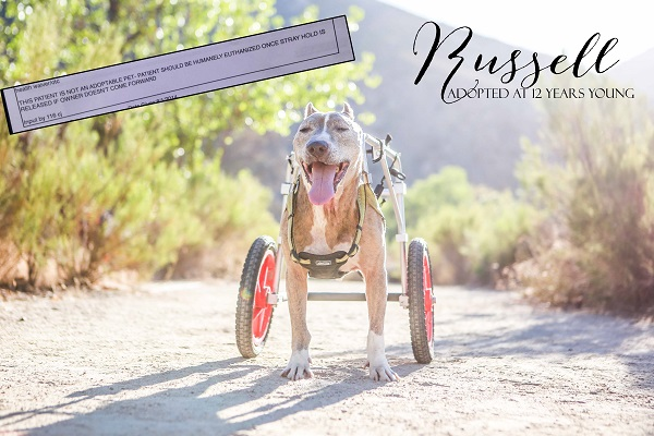 © RDP PhoDOGraphy | Daily Dog Tag | dog with wheels adopted as a senior, saved from euthanasia