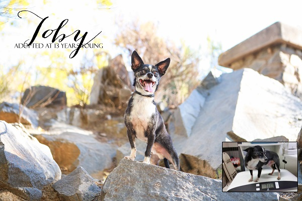 © RDP PhoDOGraphy | Daily Dog Tag | happy senior dog was adopted at 13 years young