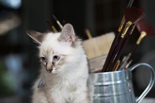 © Corner House Photography   Special Needs kitten, kitten with spinal injury,