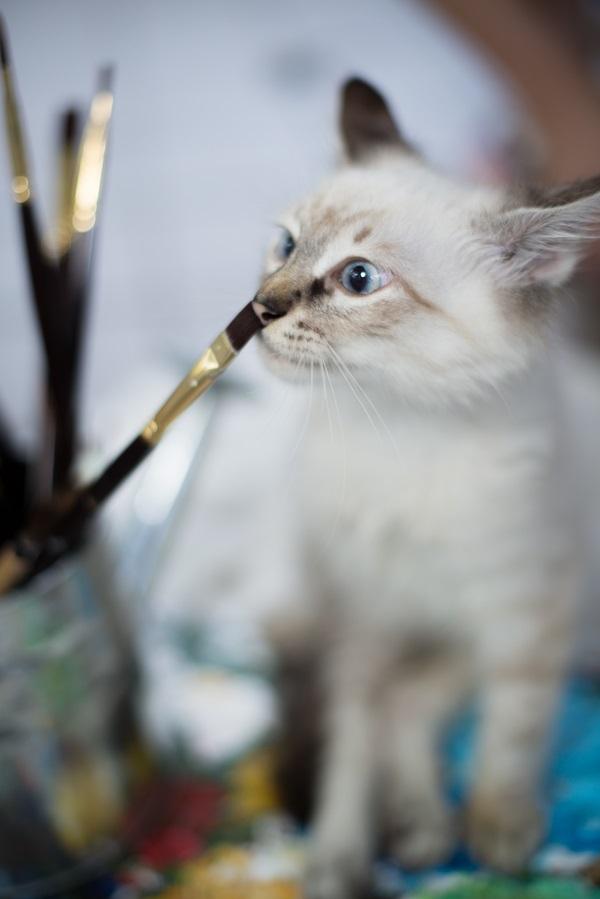 © Corner House Photography | kitten paintbrushes